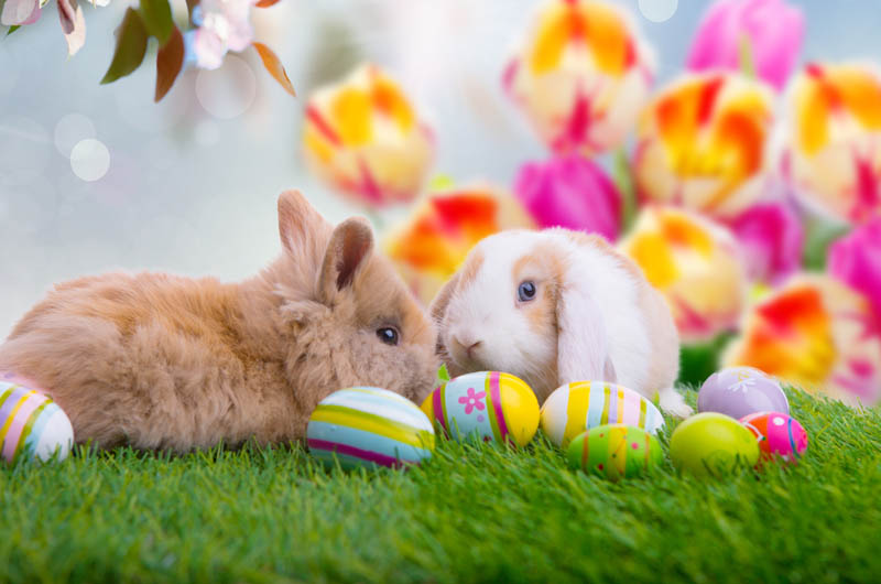 Image result for ostern