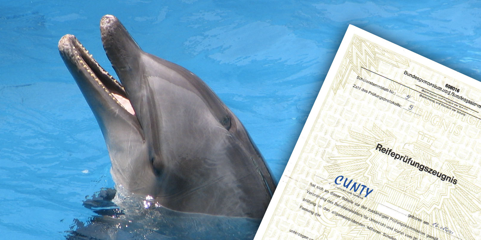 Cunty Delfin Matura