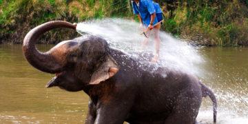 Elefant sprüht Wasser