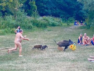 Nackter Mann läuft Wildschwein hinterher