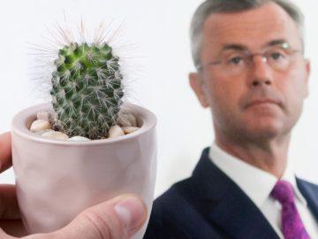 Hofer, daneben kleiner Kaktus
