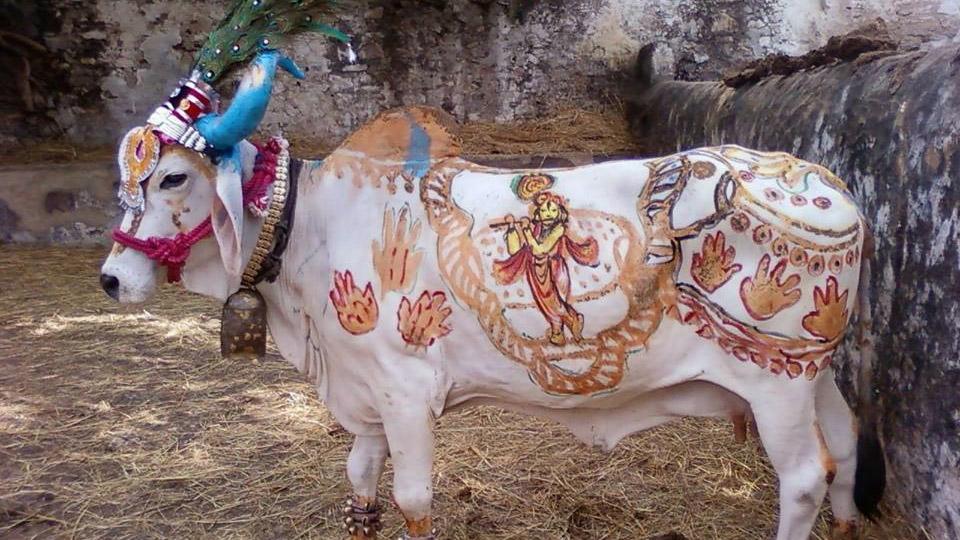 Nach-Selbstfindungstrip-in-Indien-Tiroler-Kuh-schleppt-Virus-Variante-ein